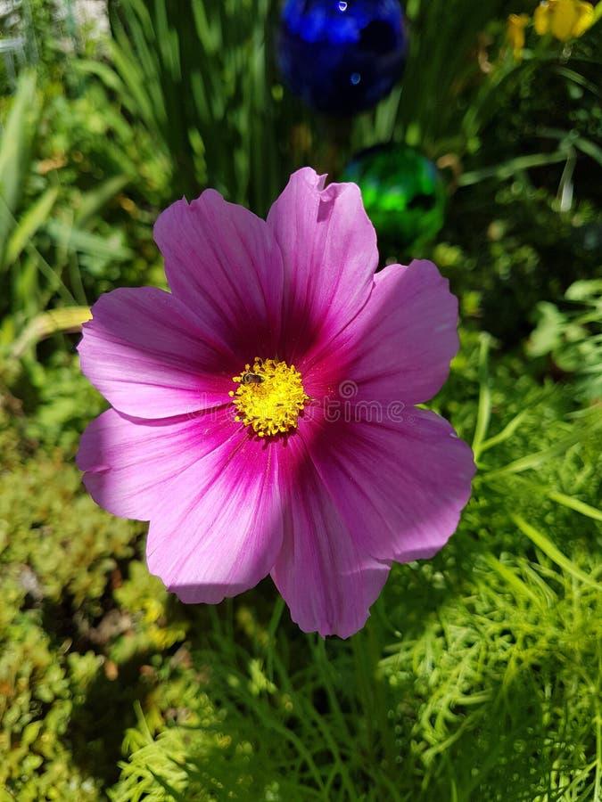 Blume royaltyfri fotografi