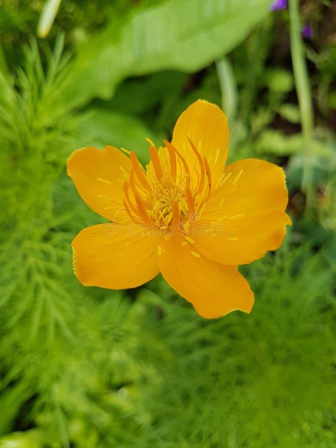 Blume arkivbild
