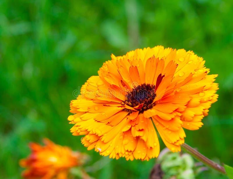 Blume stockfotografie