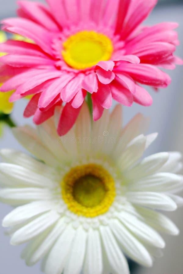 Download Blume stockbild. Bild von pink, fußboden, neigung, grün - 26369089