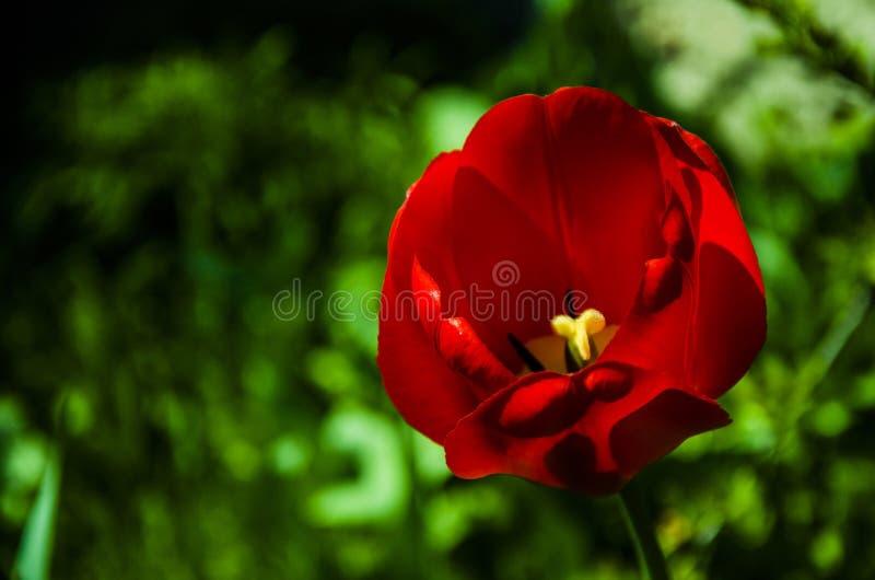 Blume lizenzfreie stockfotos