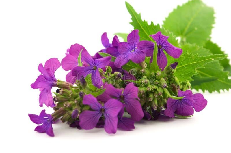 Download Blume stockbild. Bild von wiese, emerge, park, dekoration - 9099869
