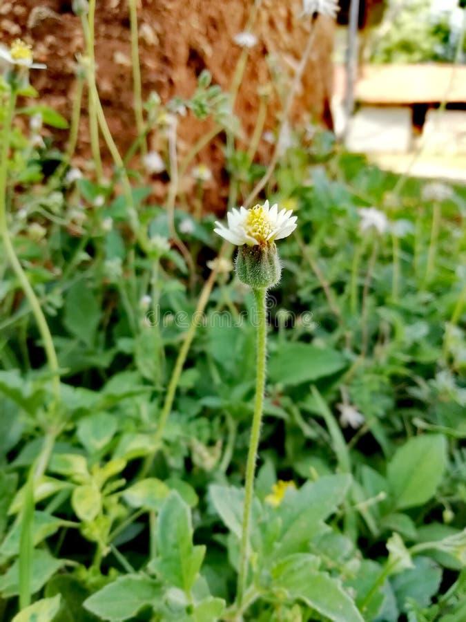 Blume allein lizenzfreie stockfotos