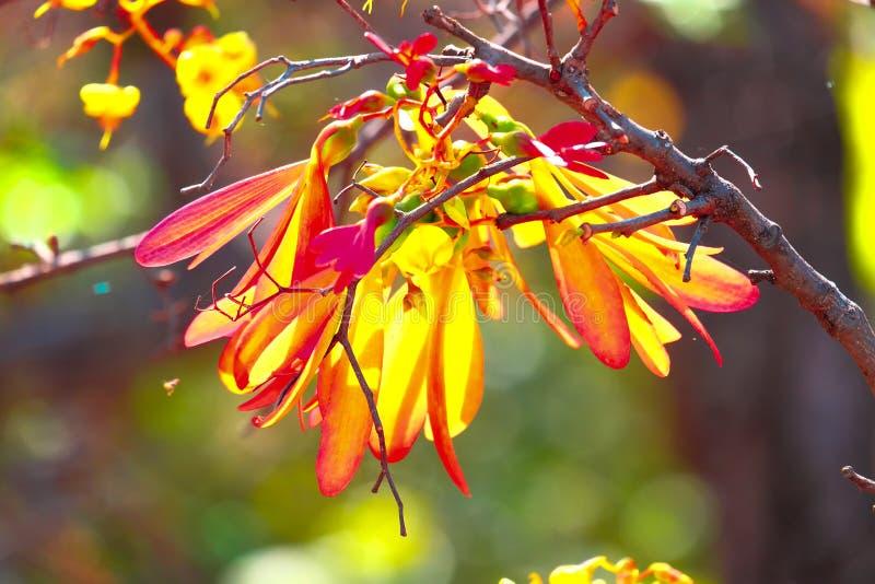 Blume auf Dürre im Holz lizenzfreie stockfotografie