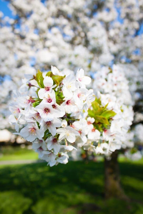 Blume auf dem Baum stockbilder