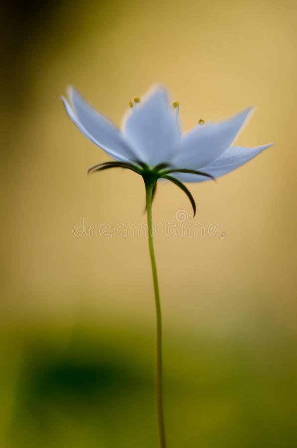 Blume auf dem Frühling lizenzfreies stockbild