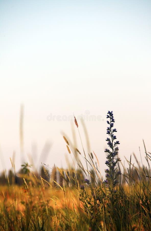 Blume auf dem Gebiet stockfoto