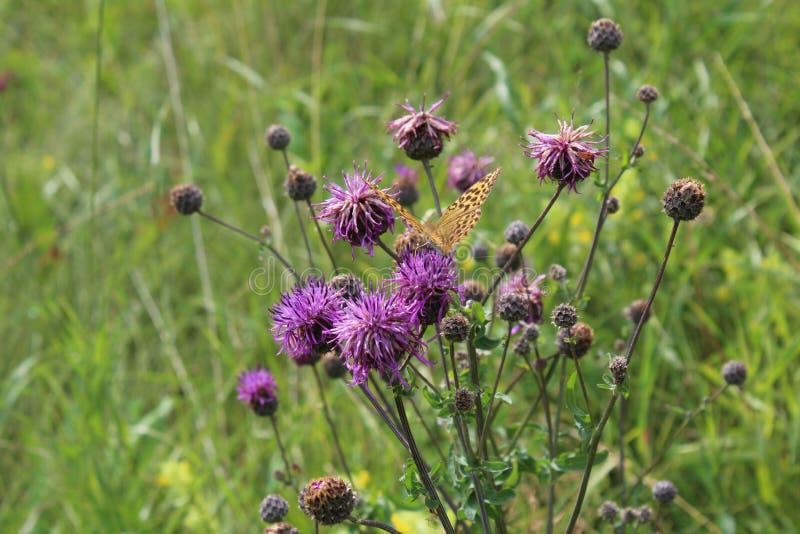 Blume auf dem Gebiet lizenzfreies stockfoto
