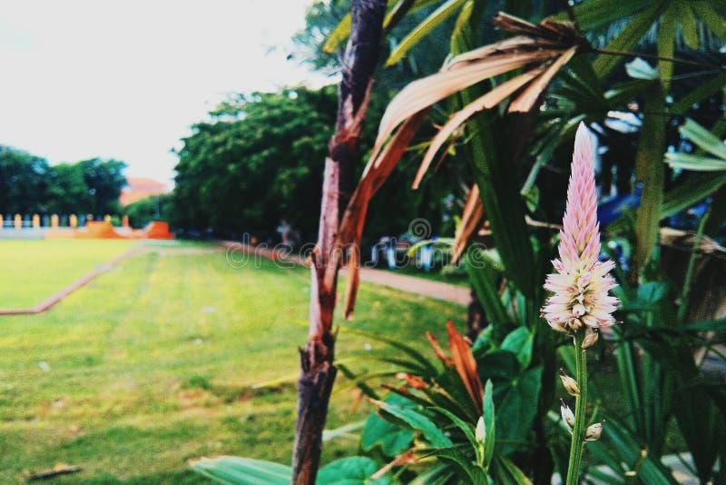 Blume auf dem Park stockfoto