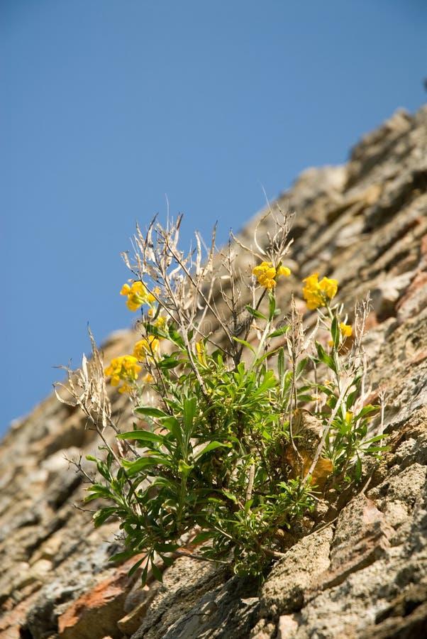Blume auf der Wand lizenzfreie stockfotos