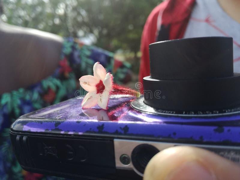 Blume auf einer Kamera stockfotografie