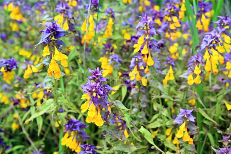 Blume auf grünem Feld lizenzfreie stockbilder