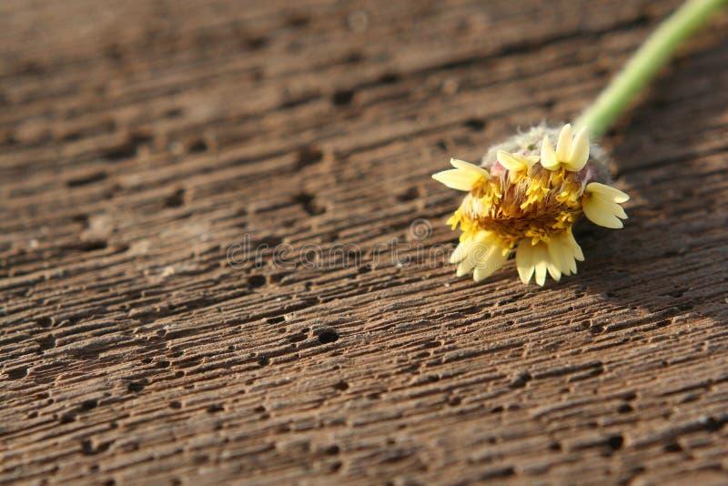 Blume auf hölzerner Planke lizenzfreie stockfotos