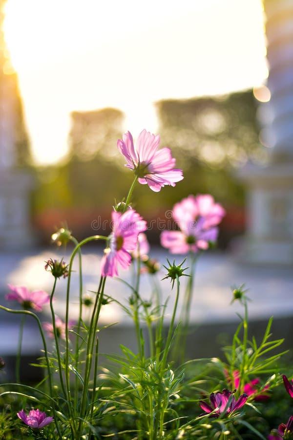 Blume auf Hintergrund bokeh lizenzfreie stockfotografie