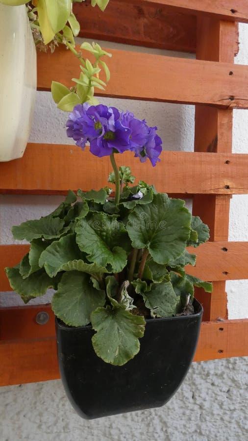 Blume auf Palette in der andalusischen Dorfhintergasse stockbild