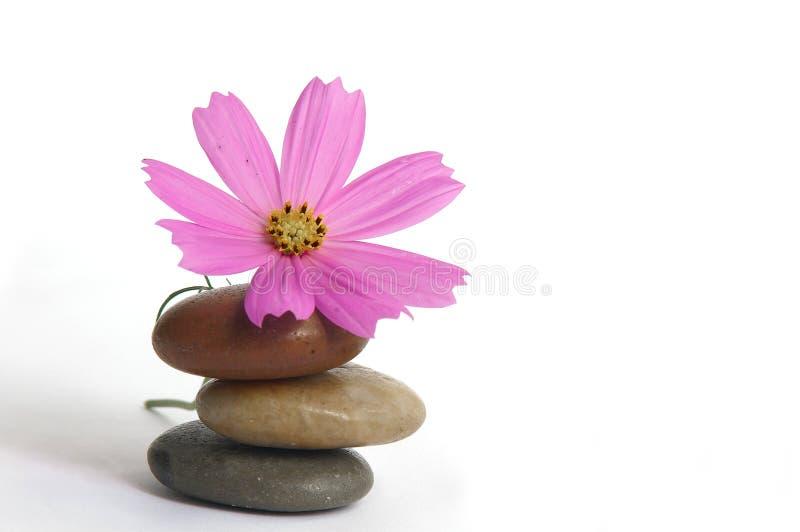 Blume auf Steinen lizenzfreies stockfoto