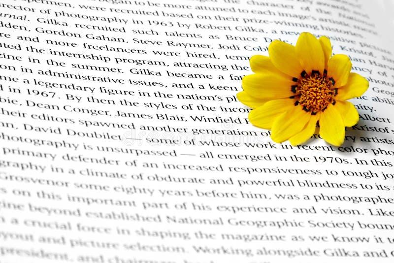 Blume auf Text lizenzfreie stockfotografie