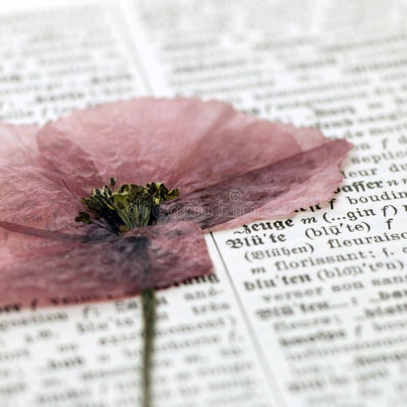 Blume auf Verzeichnis lizenzfreie stockfotos