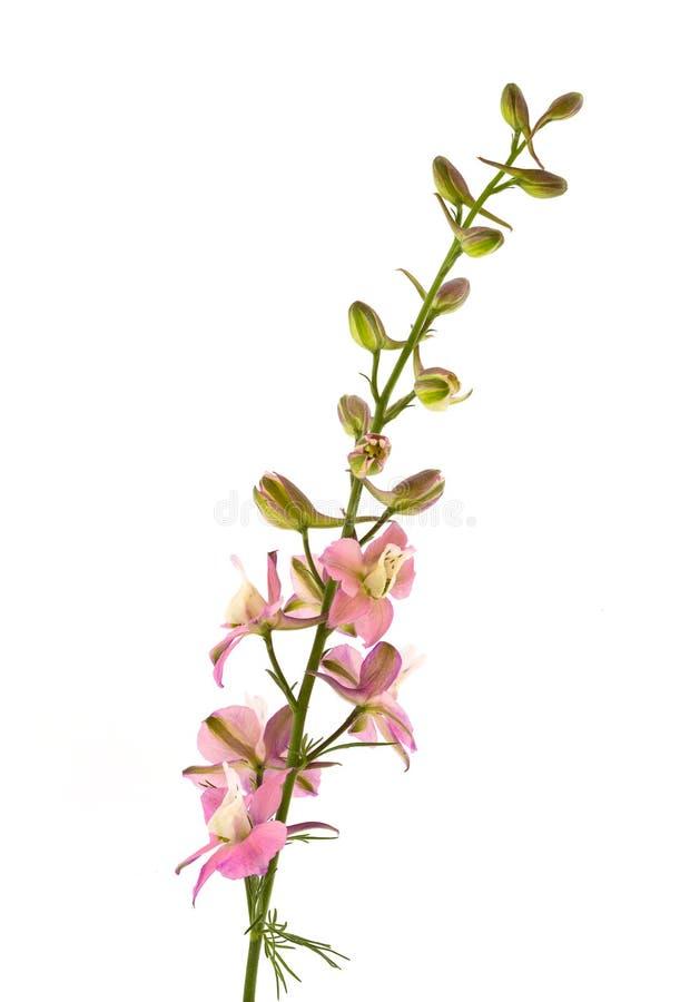 Blume auf weißem Hintergrund lizenzfreie stockbilder