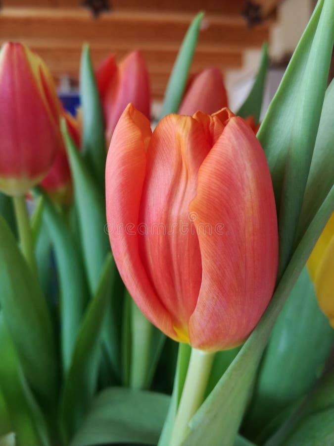 Blume, Beautyful, hübsche Blume, Orange, Gelb, grün lizenzfreies stockfoto
