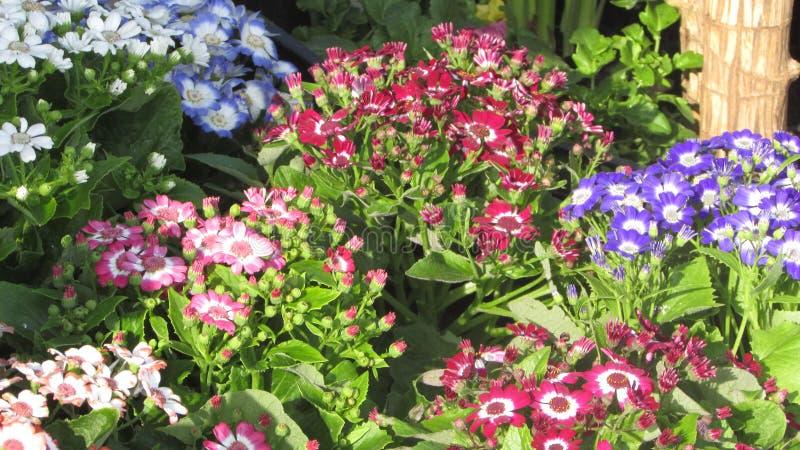 Blume blühte alle mögliche Farben lizenzfreies stockbild
