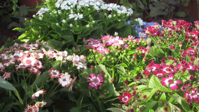 Blume blühte alle mögliche Farben stockbilder