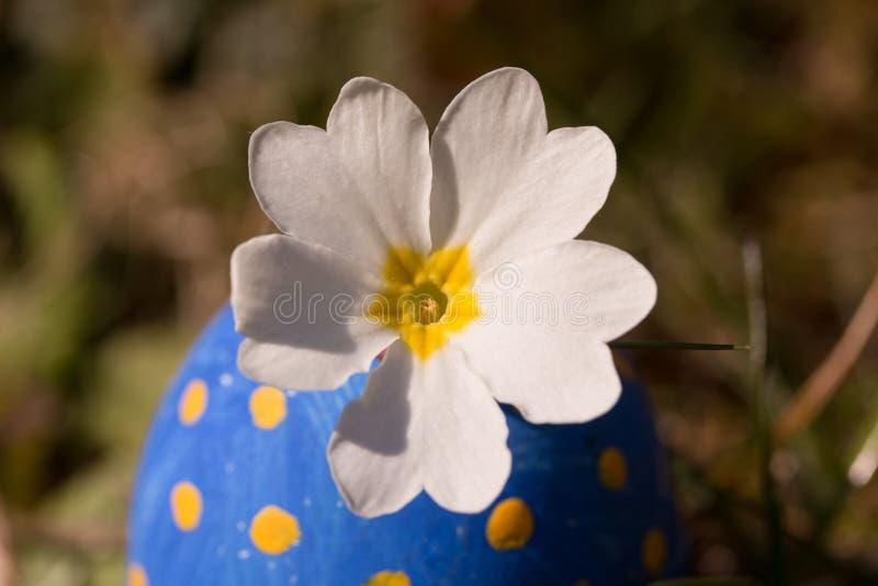 Blume in blauem Osterei lizenzfreies stockfoto