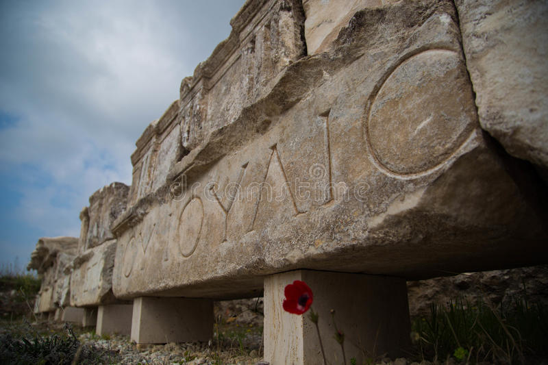Blume an den Ruinen von Hierapolis stockfotografie