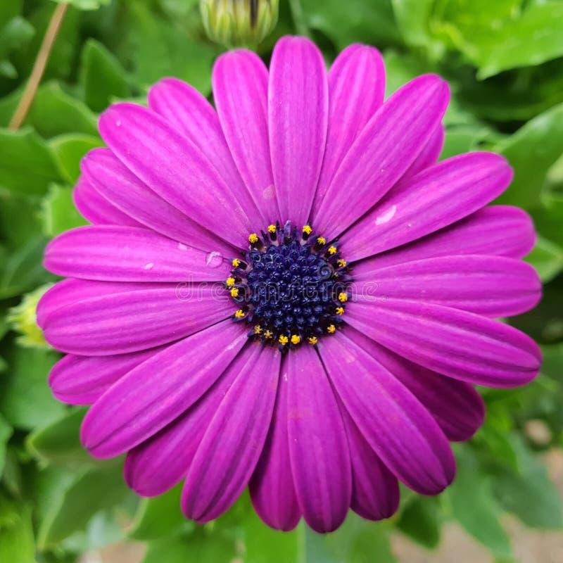 Blume in der Bl?te lizenzfreie stockfotos