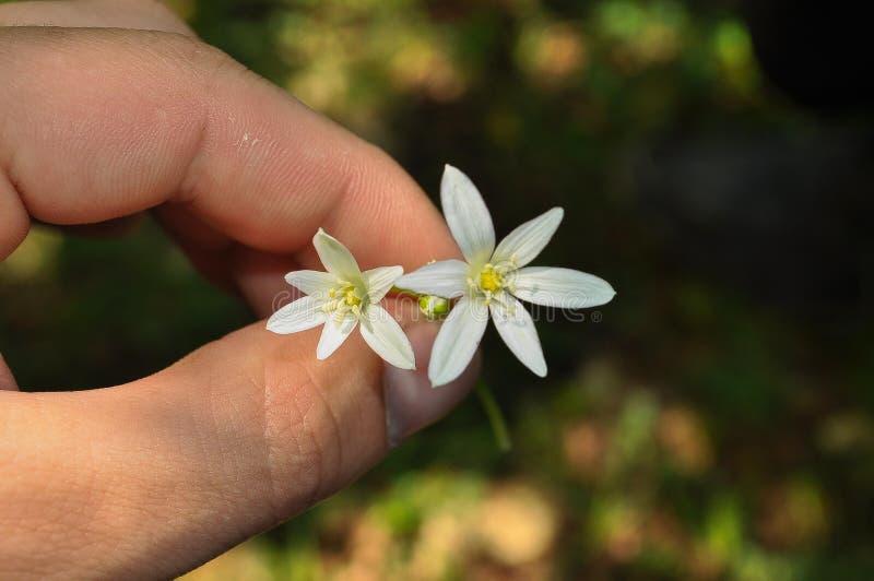 Blume in der Hand lizenzfreie stockbilder