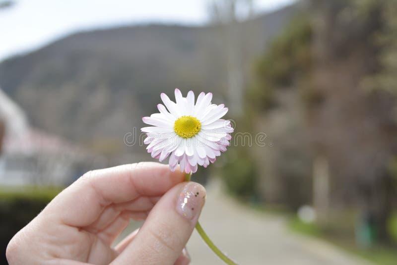 Blume in der Hand stockbilder