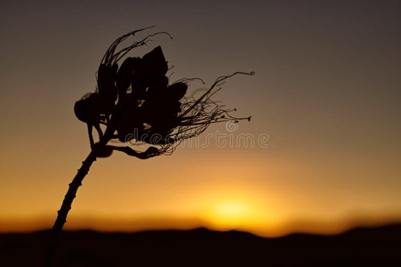 Blume an der Hintergrundbeleuchtung bei dem Sonnenuntergang stockbild