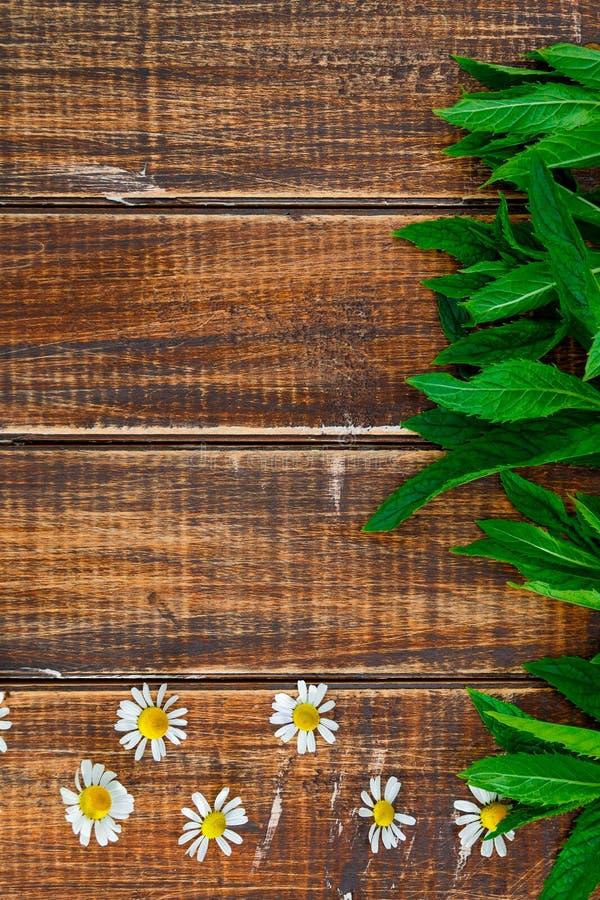 Blume der Kamille und der frischen Minze lizenzfreies stockfoto