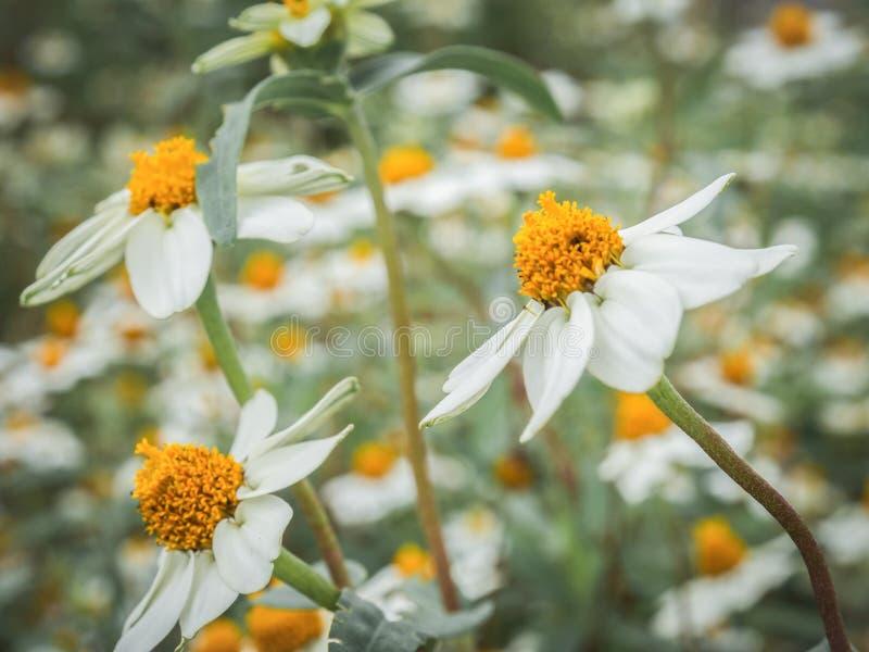 Blume in der Natur lizenzfreie stockfotos