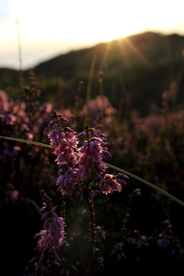Blume in der Sonne stockbild