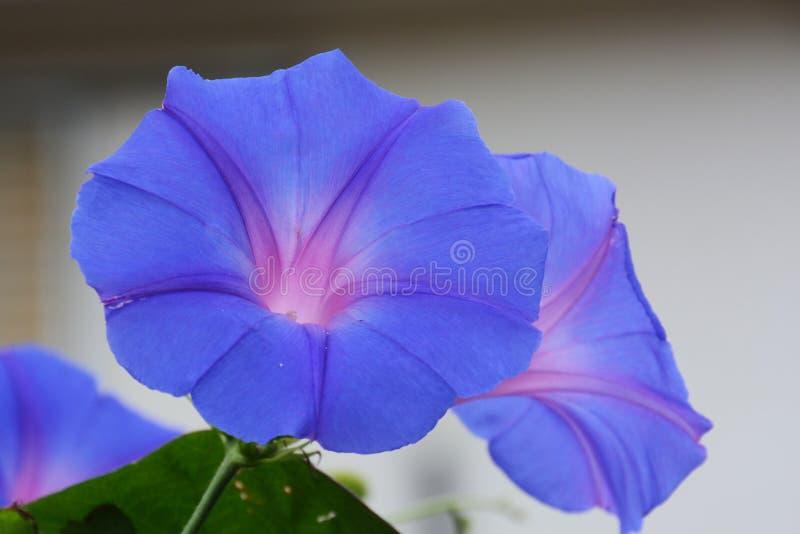 Blume der violetten Farbe auf dem natürlichen Hintergrund lizenzfreie stockfotografie