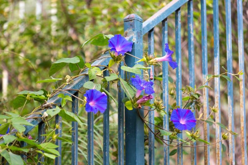 Blume der violetten Farbe auf dem natürlichen Hintergrund stockfotos