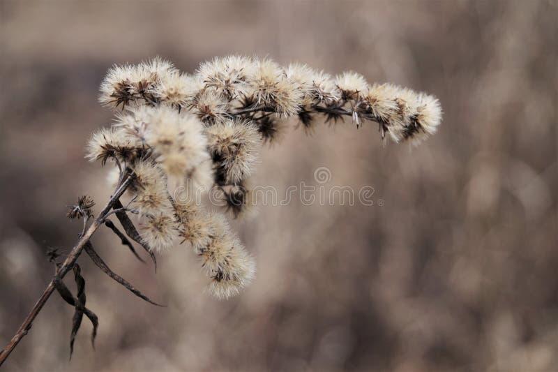 Blume der wild lebenden Tiere in der Winterlandschaft lizenzfreie stockfotografie