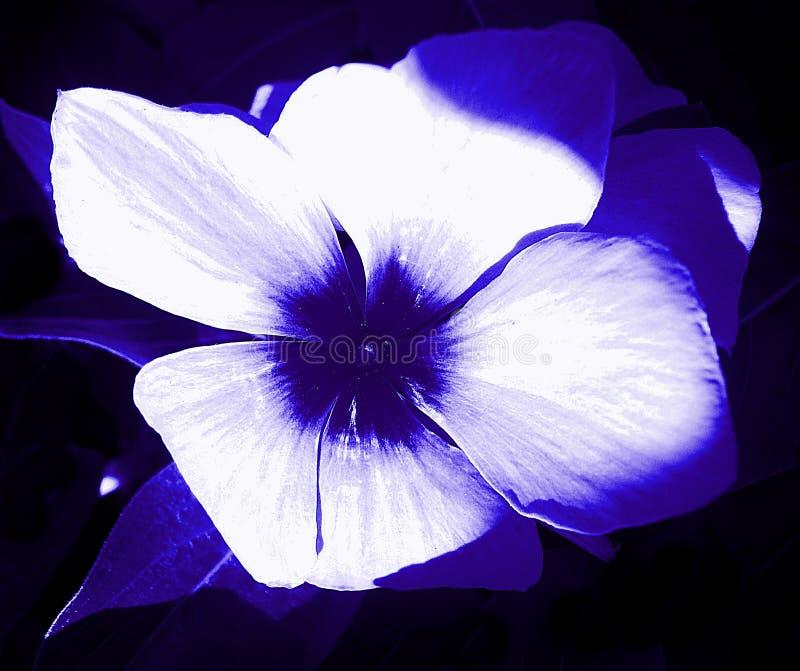 Blume des Blaus stockfoto