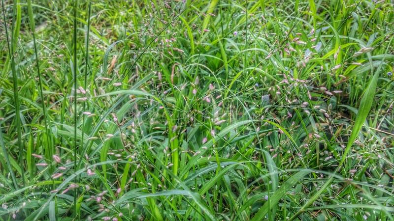 Blume des grünen Grases auf Boden Hintergrund lizenzfreie stockbilder