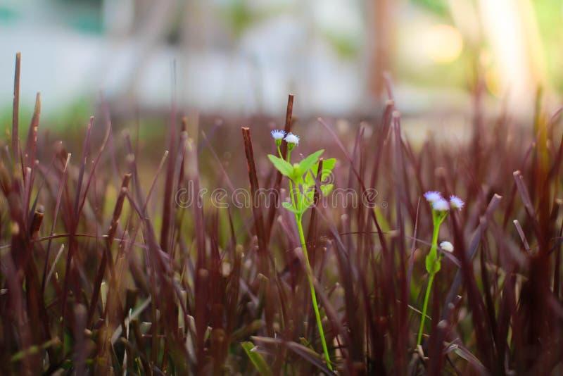 Blume des Graslands lizenzfreies stockbild
