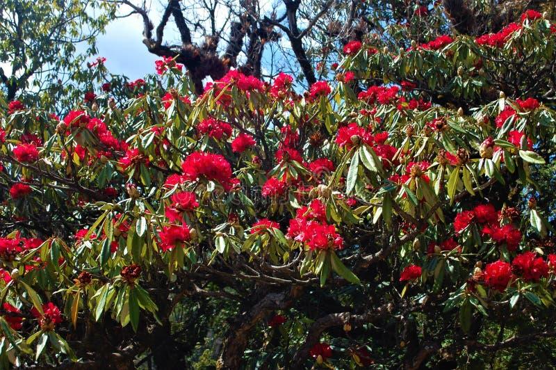 Blume, die Liebe mit Herz-Entwurf zeigt stockfotos