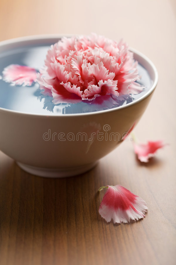 Blume, die in weiße Schüssel schwimmt lizenzfreie stockfotografie