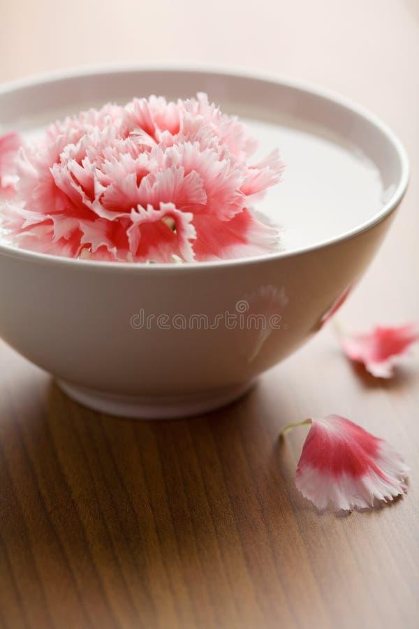 Blume, die in weiße Schüssel schwimmt lizenzfreies stockfoto