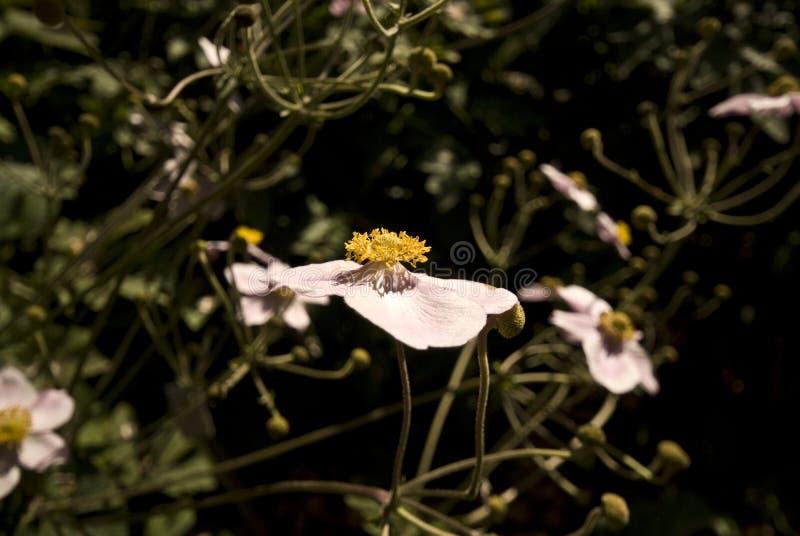 Blume in einem Garten lizenzfreies stockbild