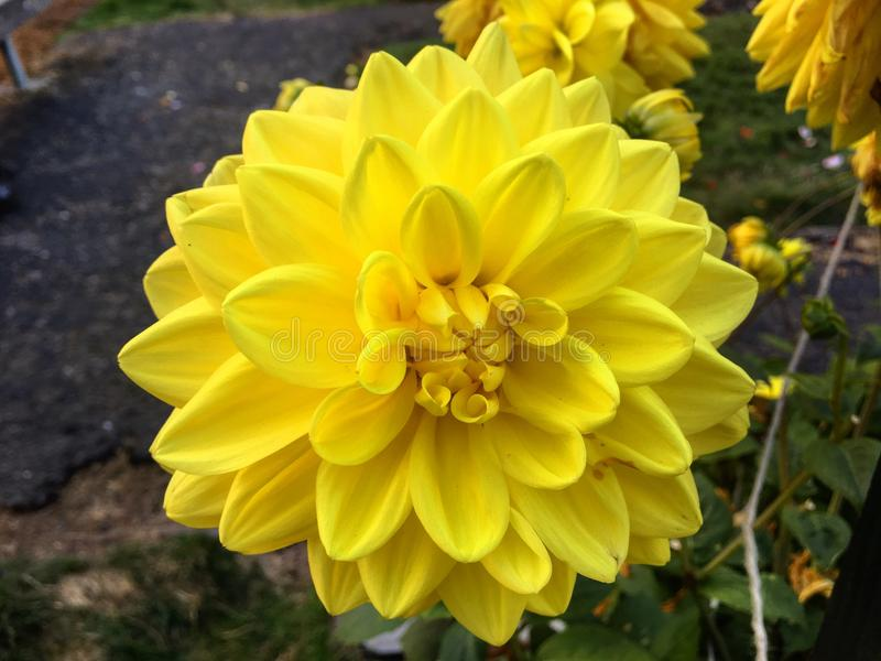 Blume in einem Garten lizenzfreie stockfotos