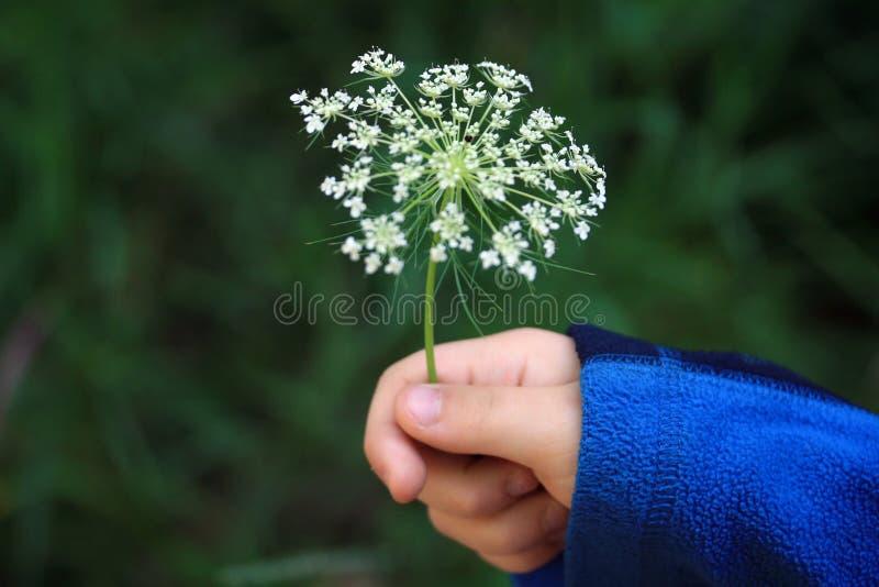 Blume in einer Hand des jungen Kindes. lizenzfreies stockbild