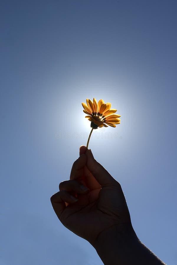 Blume für Sie stockbild