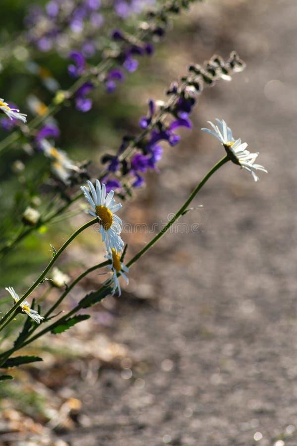 Blume am Frühjahr auf Straßenrand lizenzfreie stockfotos