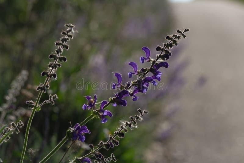 Blume am Frühjahr auf Straßenrand stockbilder